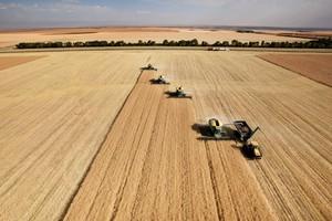 Giełdy krajowe - stabilizacja cen zbóż