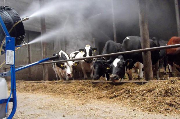 Pożyteczne mikroorganizmy w chowie bydła