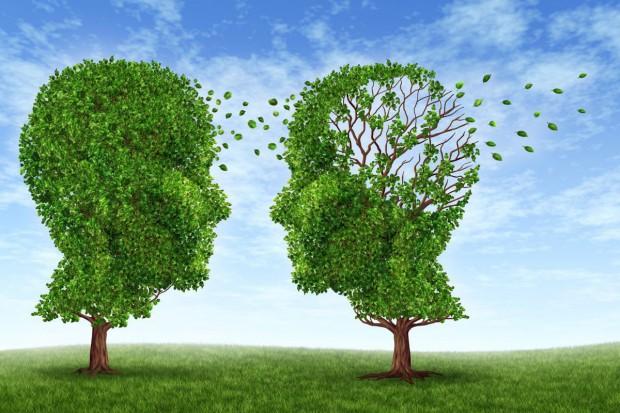 Jakie opłaty i kary za wycinkę drzew?