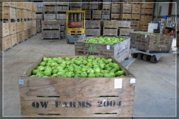 Rosną ceny jabłek w Polsce