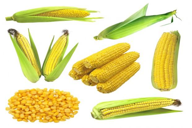Import zbóż z Ukrainy omija Polskę