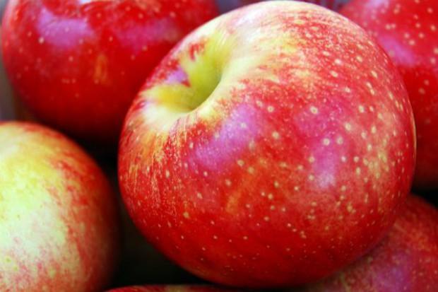 Jabłka i gruszki do USA?