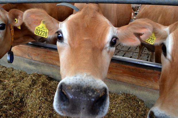 Mniej problemów z płatnościami do zwierząt