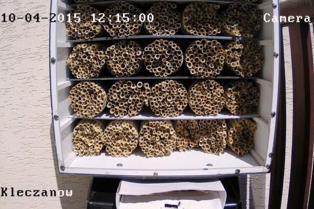 Pszczoły on-line