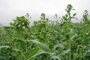 Biostymulatory - lekarstwem na stres roślin?
