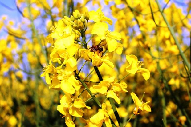PIORIN przypomina o ochronie owadów pożytecznych