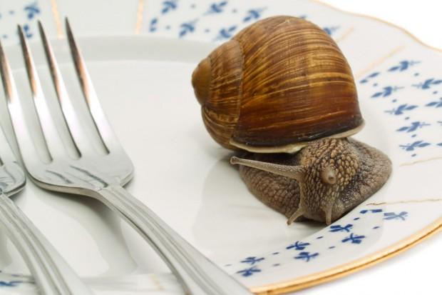 Od kilku lat mniejsze zbiory ślimaków winniczków