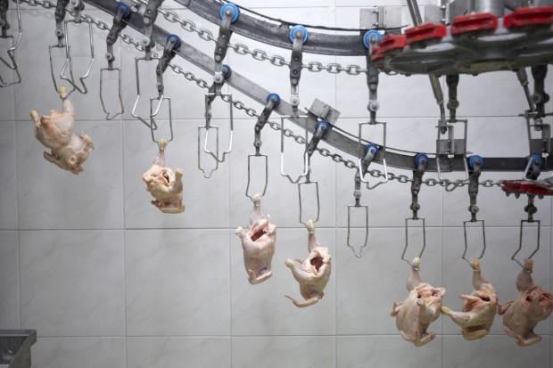 Rossielchoznadzor znalazł salmonellę w mięsie kurzym z Białorusi
