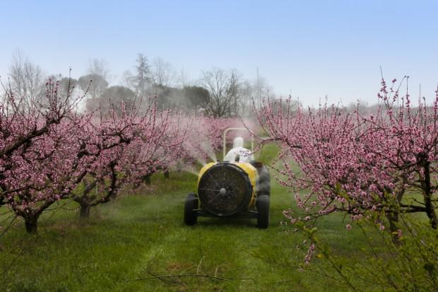 Przezimowanie roślin sadowniczych