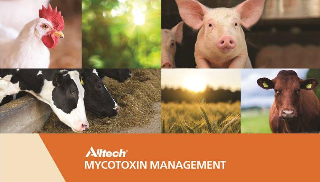 Mikotoksyny poważnym zagrożeniem dla zwierząt