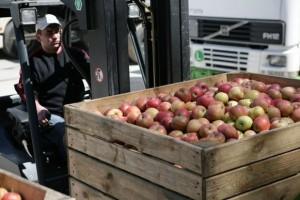Mniejszy eksport polskich jabłek