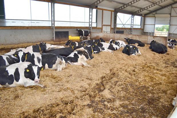 Zasuszenie i okres przejściowy krów - problemy w praktyce