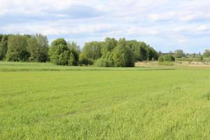 Czy rząd analizuje cenę ziemi?