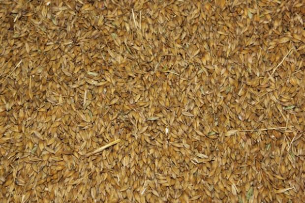 Ceny zbóż nieznacznie poszły w górę