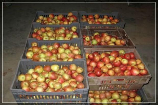 Zapasy jabłek w Polsce w maju 2015 r.