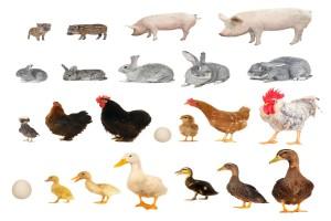 Nieformalne porozumienie ws. dobrostanu zwierząt