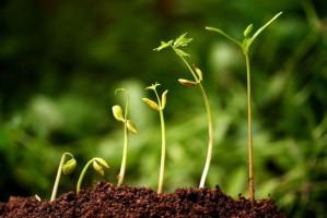 Uprawa roślin w kosmosie?