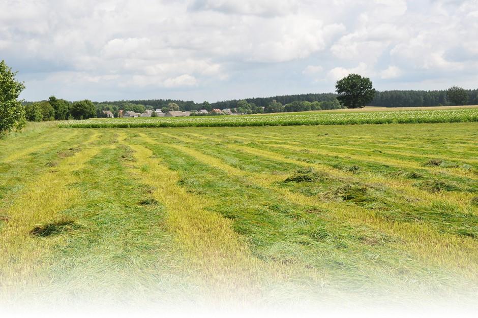 Gdy łąka skoszona