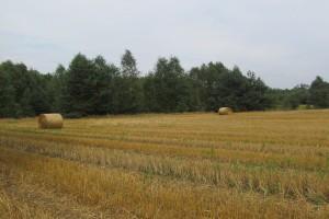 Wykup ziemi zagrożeniem dla rolników, głównie na wschodzie UE