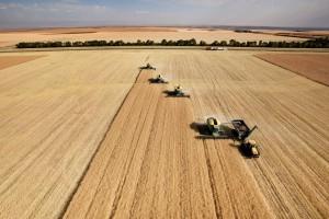 Niemcy: Prawie 5 mln ton zbóż mniej niż w 2014 r.