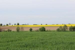 Unia Europejska potrzebuje zmiany zasad gospodarowania ziemią