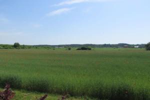 Ustrój rolny nie w formie proponowanej przez PiS