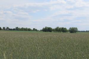 Dzierżawa tak samo ważna jak sprzedaż ziemi?