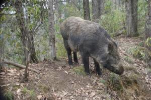 Powiaty powołają zespoły ws. upraw zniszczonych przez dziki