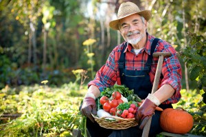 KRUS: Składki na ubezpieczenie społeczne rolników w III kwartale 2015 r.