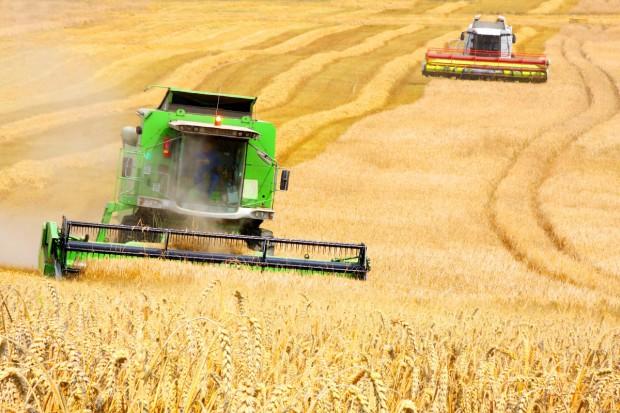 OECD i FAO - o zbożowych prognozach