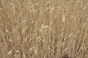 Susza rolnicza w 19 gminach województwa