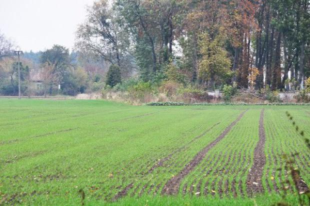 Projekty noweli ustawy o ochronie gruntów rolnych i leśnych wracają do komisji rolnictwa