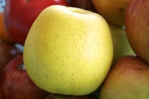 Zapasy jabłek w Polsce mniejsze niż przed rokiem