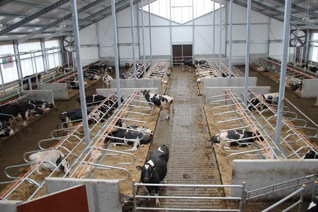 Stres cieplny i jego konsekwencje w stadach krów mlecznych