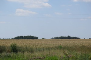 Ustawa o ustroju rolnym niezgodna z Konstytucją?