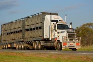 Globalizacja rynku wieprzowiny - JBS Swift kupił Cargill Pork