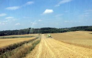 Trwają żniwa pszenicy ozimej w spółce IMC na Ukrainie