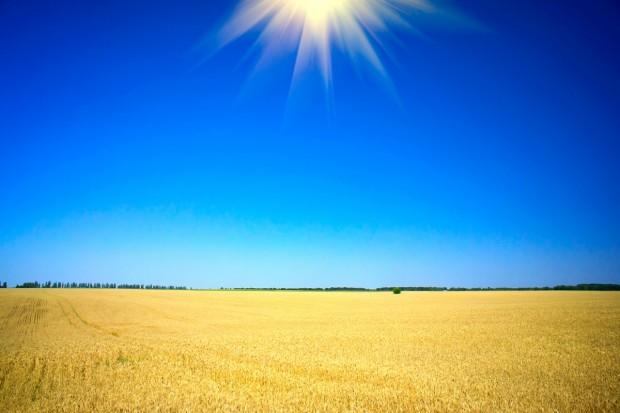 Ukraina: Mimo kryzysu większy eksport pszenicy