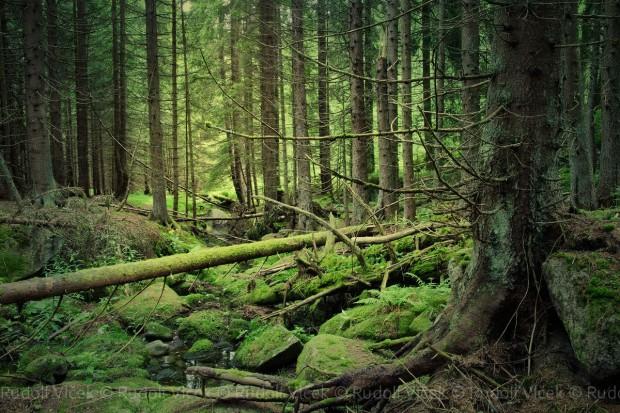 NIK prowadzi kontrole ws. Lasów Państwowych