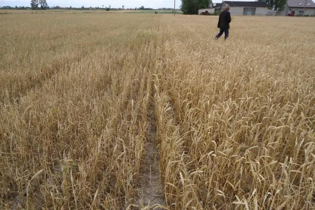 Według najnowszego raportu IUNG zagrożenie suszą minęło