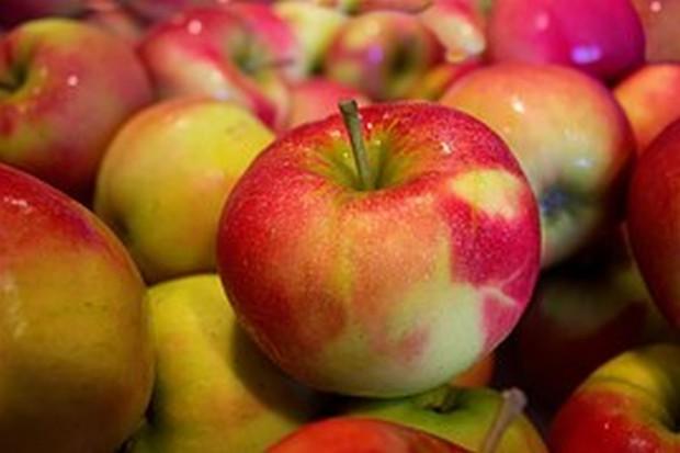 Polski eksport jabłek mniejszy niż przed rokiem