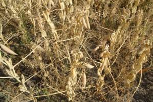 Wiceminister rolnictwa: suszę rolniczą stwierdzono w 13 województwach