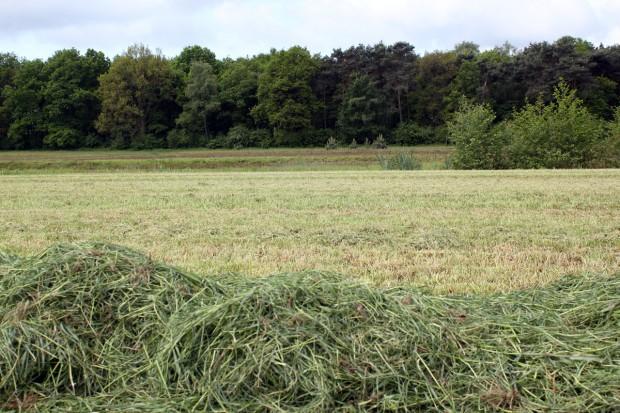 Ostatni tydzień na wykoszenie łąk