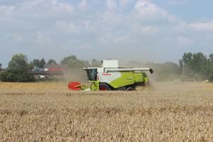 Aktualne ceny skupu zbóż