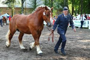 Konie zimnokrwiste w Kętrzynie