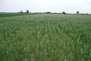 Senat wniósł poprawki do ustawy o kształtowaniu ustroju rolnego