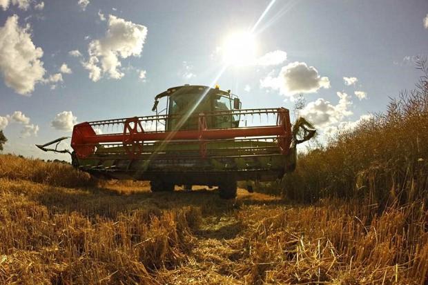 Limagrain: Wyniki plonowania rzepaku wg. odmian