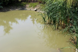 Uwaga na sinice w zbiornikach wodnych