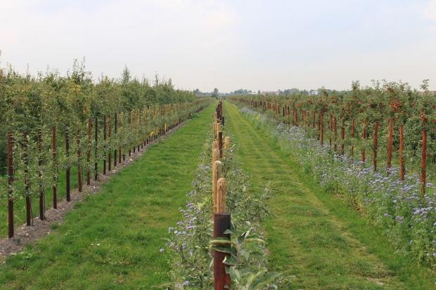 UE: Spadek produkcji jabłek, ceny mogą wzrosnąć