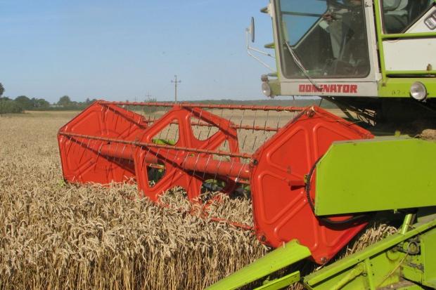 Spokojnie w skupach zbóż
